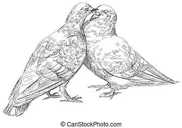 baciare, vettore, amanti, piccioni