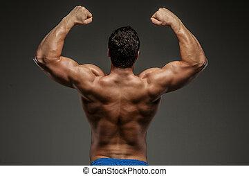 back., bodybuilders, estúdio, disparar