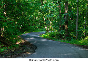 A paved back country road in the forest.