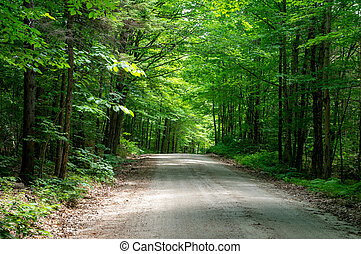 A rural dirt country road in the green forest.