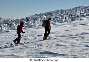 Back country skiers (ski touring), walking up to a snowed mountain