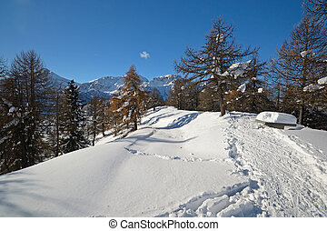 Back country ski and snowshoe tracks on the top of a mountain in a scenic alpine winter landscape.