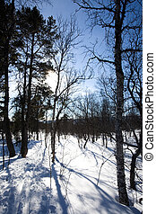 Back Country Skiing - Ski trail through the forest - back...