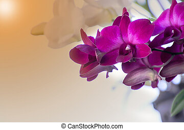 Back ground orchid