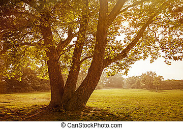 back lit image of an autumn tree
