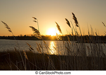 reeds on beach at sunset
