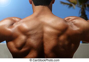 back of bodybuilder - photo of bodybuilder's back with...