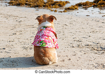 Back of Chihuahua dog