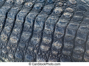 back of crocodile as background and texture