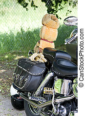 back of motorcycle - The back of a motorcycle, with studded...