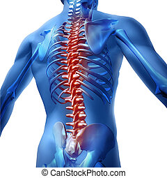 Back Pain In Human Body - Human body backache and back pain...