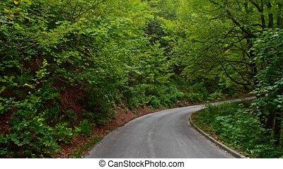 Back road through the woods in Croatia. Europe.