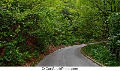 Back road through the woods in Croatia. Europe.