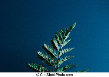 Back side of a fern with spores on a dark blue background with space for text. Natural layout. Flat lay