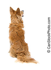 back side of a mixed bred dog