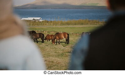 Back view of two people visiting the animals farm. Business partners talking about Icelandic horses.