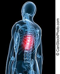 backache - 3d rendered illustration of a transparent body ...