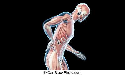 Backache animation - Medical animation of a man having a...