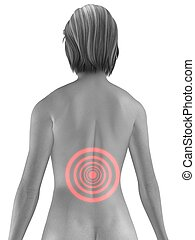 backache - 3d rendered illustration of a highlighted female...