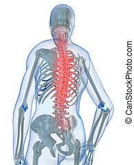 3d rendered illustration of a human skeleton with highlighted spine