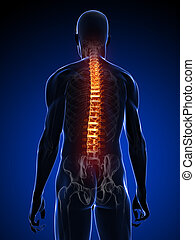 backache illustration - 3d rendered illustration of a ...