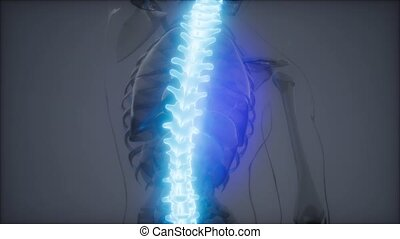 backache in backbone. science anatomy scan of human spine bones glowing