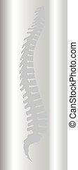 Backbone - Scan of the backbone over a grey background