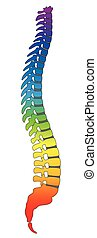Backbone Rainbow Colored Spine