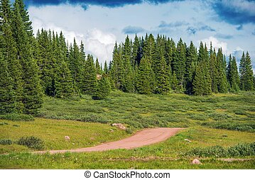 Backcountry Forest Road - Backcountry Summer Forest Road in...