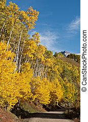 Backcountry Road In Colorado