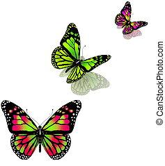 backg, vlinder, witte , drie