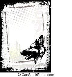 backgorund, affiche, chien, alsacien