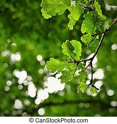backgr, congedi verdi, quercia, astratto
