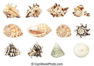 backgr, fuoco., tutto, set, isolato, alto, res., shell., bianco