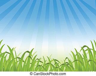 backgr, herbe, illustration