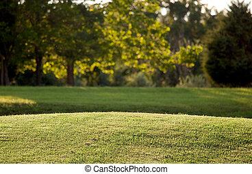 backgroun, gräsmatta, synhåll, bakbelyst