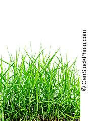 backgroun, printemps, isolé, vert, frais, blanc, herbe