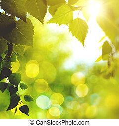 backgroun, résumé, clair, ambiant, forêt, après-midi