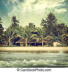background-62 - Vintage palm background