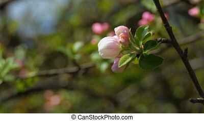 Background a Spring primrose