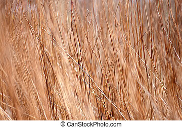 Background a structure - a dry grass Abstract background.