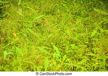 background abstract green leaves