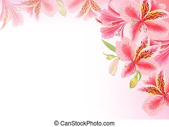 Background alstroemeria flower. Eps10 format