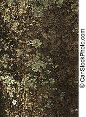 Background and texture from the tree trunk. Dark brown color and rough on tree trunk. Mold on tree trunk.