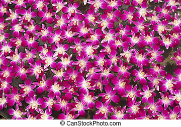 Background and texture of purple orchid floating on the water.