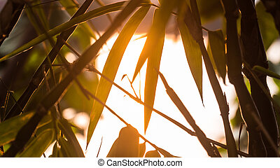 Background at Sunset with a Leaf silhouette