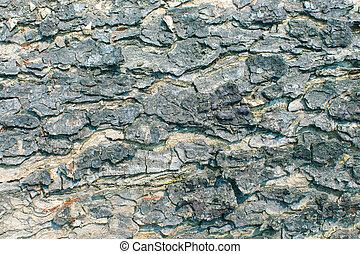 Background bark detail texture background