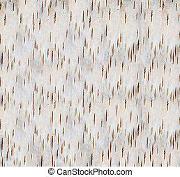 background birch bark