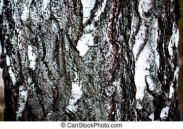 background birch bark texture
