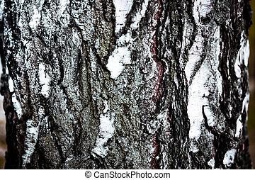 background birch bark texture